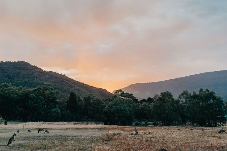 sunset in the grampians Grampians National Park Kangaroos Nature Mountains Tree Mountain Sunset Astronomy Rural Scene Agriculture Sky Landscape