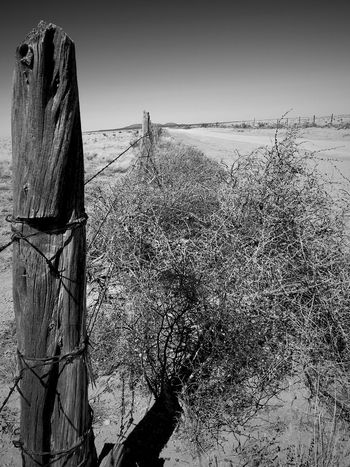 """Fence Posts And Tumbleweed"" Along a County dirt road to Cedarvale, New Mexico. Rural Scene Rural New Mexico Photography New Mexico Blackandwhite Photography Black & White Black And White Blackandwhite Tumbleweed Dirt Road Fencepost Outdoors Nature No People Clear Sky Tranquility Wooden Post Scenics Landscape"