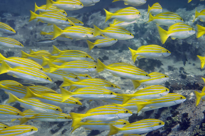 Close-up of yellow underwater