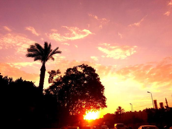 Sunset Skyporn Cloudporn TreePorn