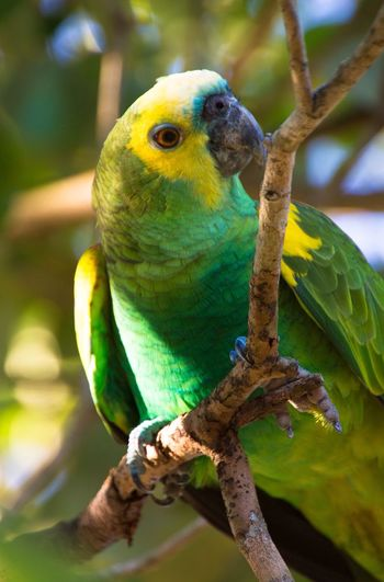 Parrot Birdlife Bird Greenparrot Animal