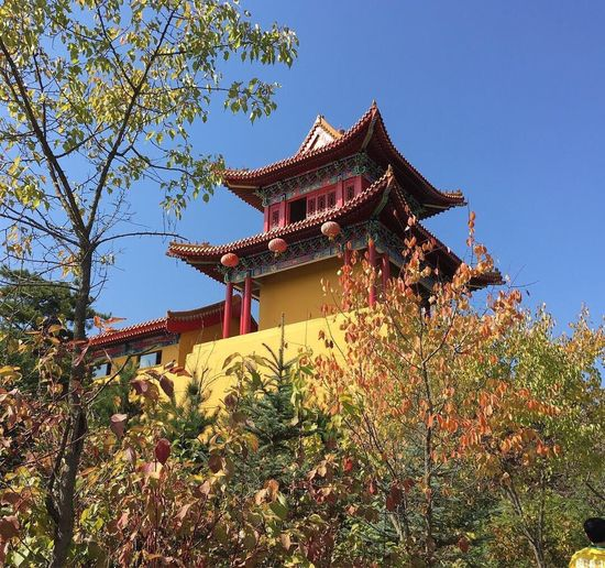храм китай осень небо краскиосени китай небо краскиосени осень China Tree Temple Chinese Temple Architecture Temple - Building Temple Leaves🌿 Autumn Leaves Beauty In Nature