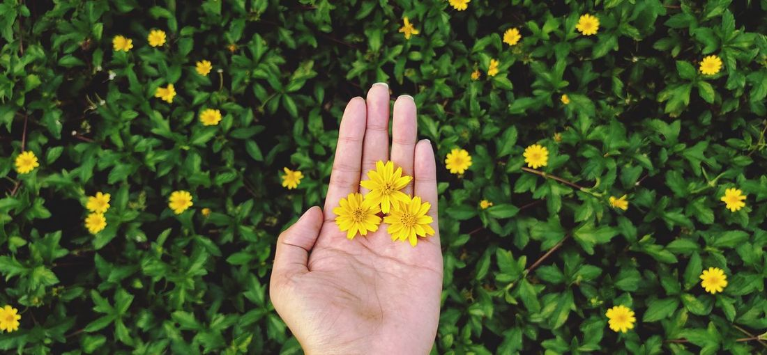 Beautiful flowers on my hands