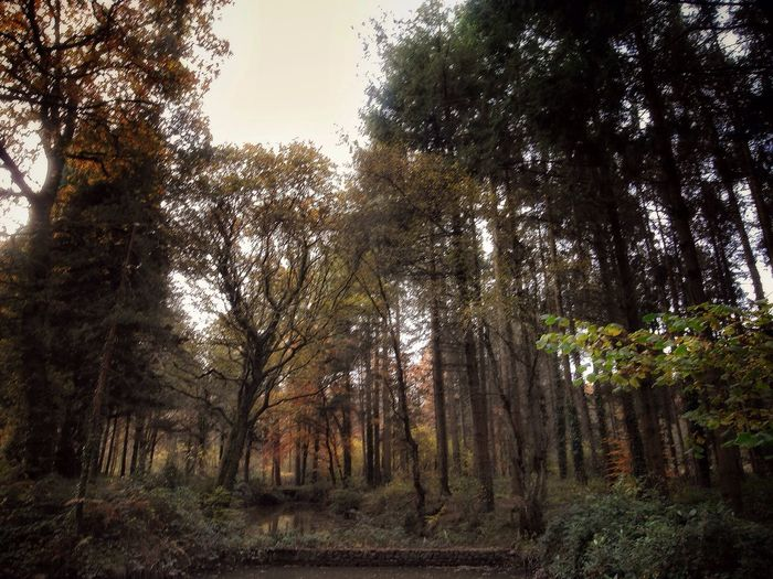 Close-up Change Scenics Beauty In Nature Forest WoodLand Fallen