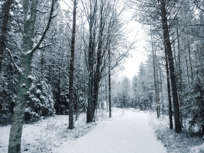 Winter wonderland Sweden Scandinavia Minimalism Backgrounds Norrland Umeå Wanderlust Silence Silence Of Nature Silent Moment Tree Snow Cold Temperature Winter Forest Snowing Tree Area Pinaceae Frozen Bare Tree Countryside