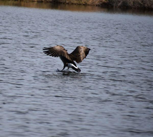 Bird flying over lake