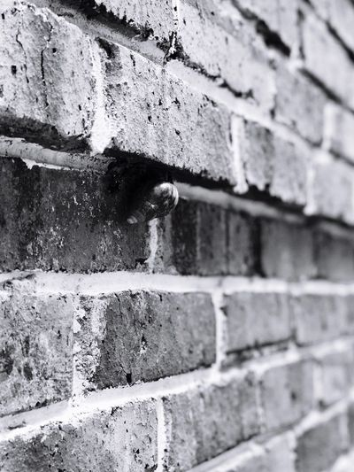 Against Gravity Snail Survival Wall - Building Feature Brick Wall Built Structure Architecture Day Building Exterior No People Outdoors Textured  Close-up Blackandwhite Photography KLPAC The Street Photographer - 2017 EyeEm Awards