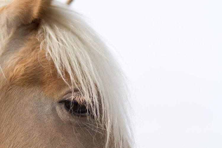 Horse hair One