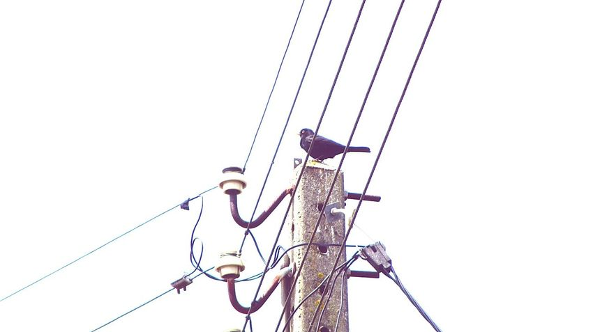 The bird and the lines.. Bird Watching Looking Up Electric Lines Bird Photography Taking Photos Just Taking Pictures Eye For PhotographyEyeEm Birds Taking Pictures
