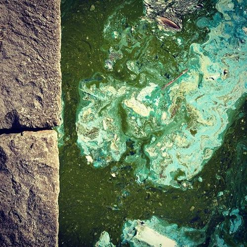 Abstract Photography Abstractions In Colors Blue Color Green Color Liquid Sidewalk Abstract Close-up Colorful Day Dirt Dust Ecology High Angle View Lake Nature No People Outdoors Pollution Poluted Earth Polution On Water Problem Rock - Object Textured  Water