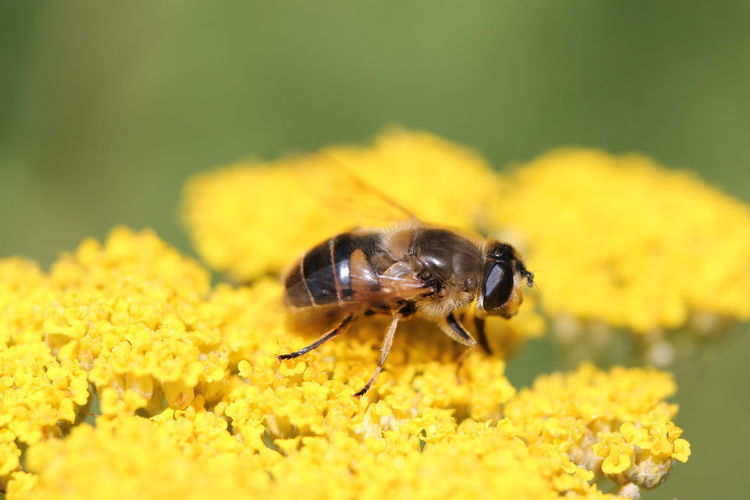 Close-up of bee pollinating on yellow flower outdoors
