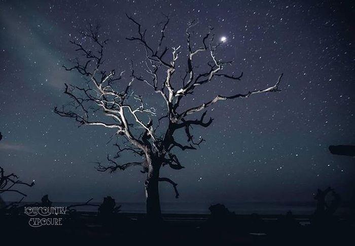 What an amazing night! Huntingisland Southcarolina Discoversc Onlyinsouthcarolina Peacetree Longexposure Starynight