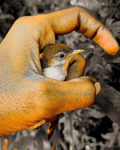 Close-up of a hand holding a bird