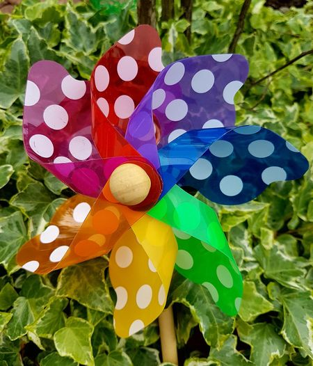 rainbow wimdmill White Dots Outdoors Outdoor Photography Garden Photography Toys Childrens Toys Rainbow Colors Plastic Material Multi Colored Flower Head Leaf Spotted Pattern Close-up
