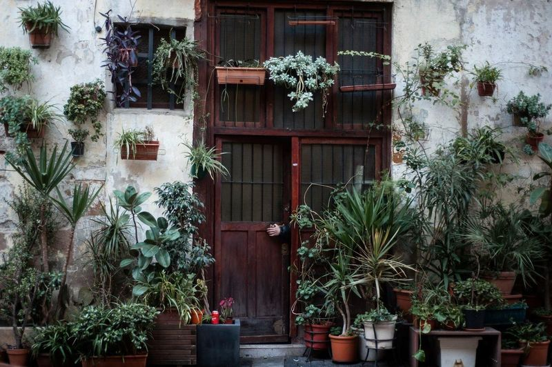 Potted plants against window of building