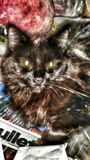 Here is Kiki if she comes out from hiding ill send a new photo hairless Taking Photos Enjoying Life Ocean Beach San Diego Share Your Gift Cat Photography Depressed Cat Cat Lovers Life Is A Journey Special Effects