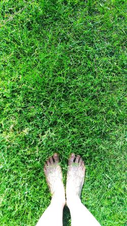 Grass Green Color Human Leg High Angle View One Person Human Body Part Outdoors Nature Legs_only Legsselfie Legs Legs Legs Grassfield Grass Grasses And Sun Green Green Green Green!  Green Grass Mix Yourself A Good Time The Week On EyeEm