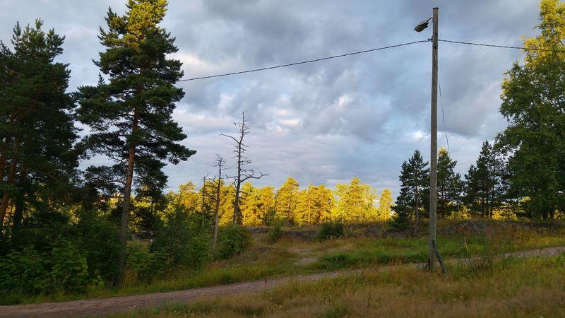 Aamu kuvaamista ©️JaniVauhkonen Tree Cloud - Sky Outdoors Day No People Nature Sky Beauty In Nature Morning Light JaniVauhkonen LGG4