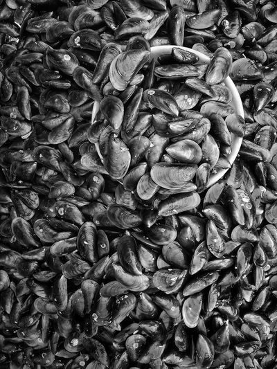Mussel Seafoods Mussel Seashell Backgrounds Full Frame Textured  Pattern Abstract Close-up
