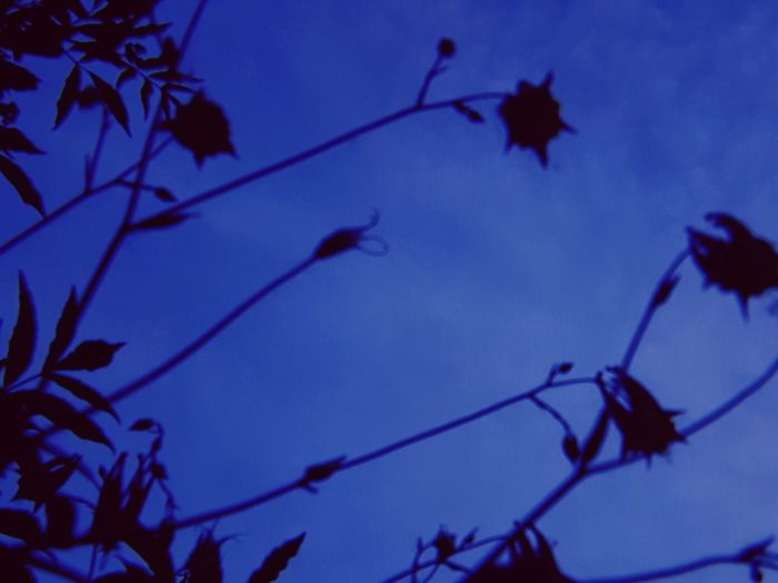 🥀 Darkflowers EyeEmNewHere Branch Winter Tree Silhouette Blue Close-up Sky Plant Bud Dead Plant Dried Plant Dried Wilted