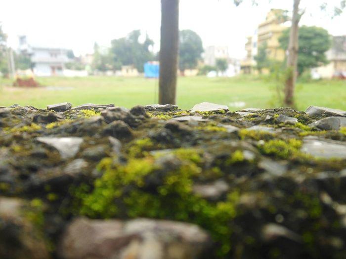 Green Algae Outdoor Trees