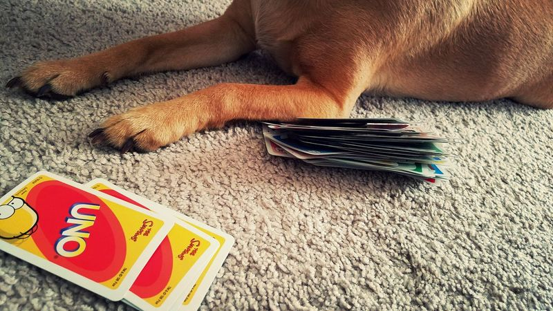 UNO Game UNO Ruby Games Cards Winner Can I Play Canine Canine Photography Dog Paw Paws Carpet Textures And Surfaces Floor Fur Simpsons Animal Themes Elbow Funny