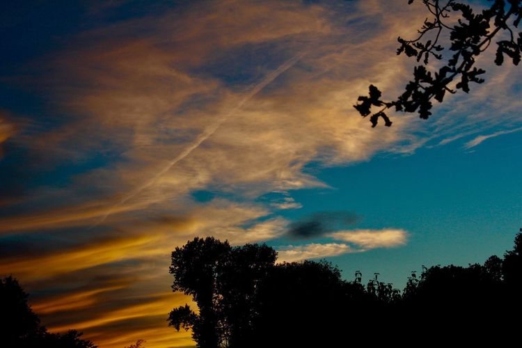 Gute Nacht Freunde ✨🌔🌙💫⭐️🌟✨ EyeEm Nature Lover Picoftheweek Picoftheday Nature_collection Tree Sky Plant Cloud - Sky Silhouette Low Angle View Beauty In Nature Non-urban Scene Dramatic Sky No People Dusk Outdoors Tranquil Scene Growth Tranquility Sunset Nature Scenics - Nature Idyllic