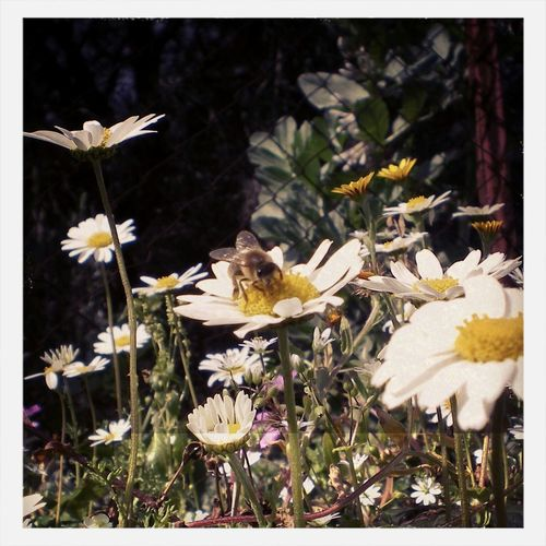 Flowers Flowers,Plants & Garden Relaxing honey bees