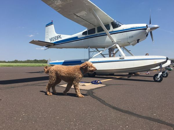 June 19, 2016 Animal Head  Blue Cessna Close-up Day Dog Goldendoodle Mammal Nature No People Outdoors Sky Sunlight Sunny Superior Wisconsin