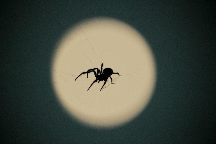 月夜に潜む影🌙 Moonlight Moon Nightphotography NightSnaps Spider Silhouette 暗くなると降りてくる🌃おつかれさま♪