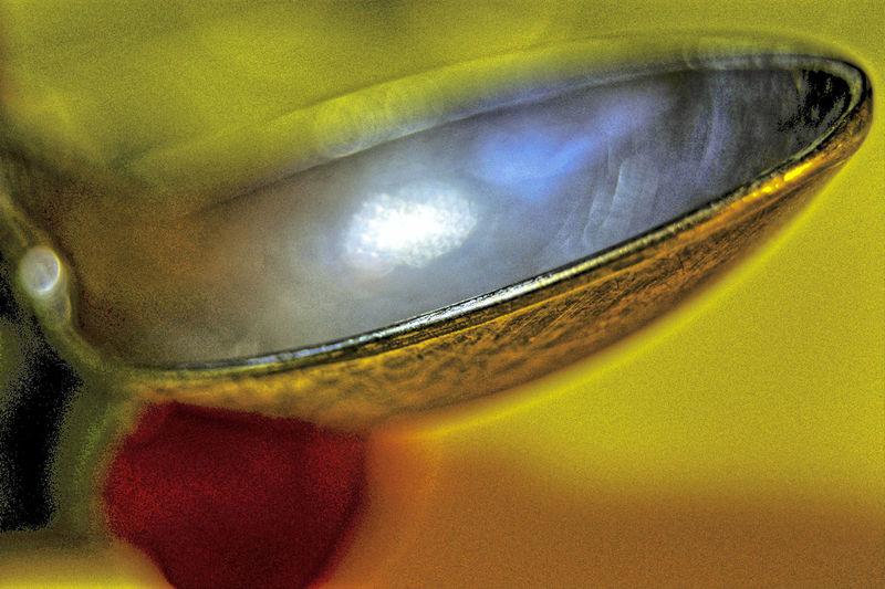 abstract jelwery Abstract Abstract Jelwery Close-up Coffee Spoon Colorfull Colors Cucharita Day Fragility Indoors  Jewel Jewelry Joya Joyas Joyeria Nature No People Spoon Sugarspoon Tea Spoon