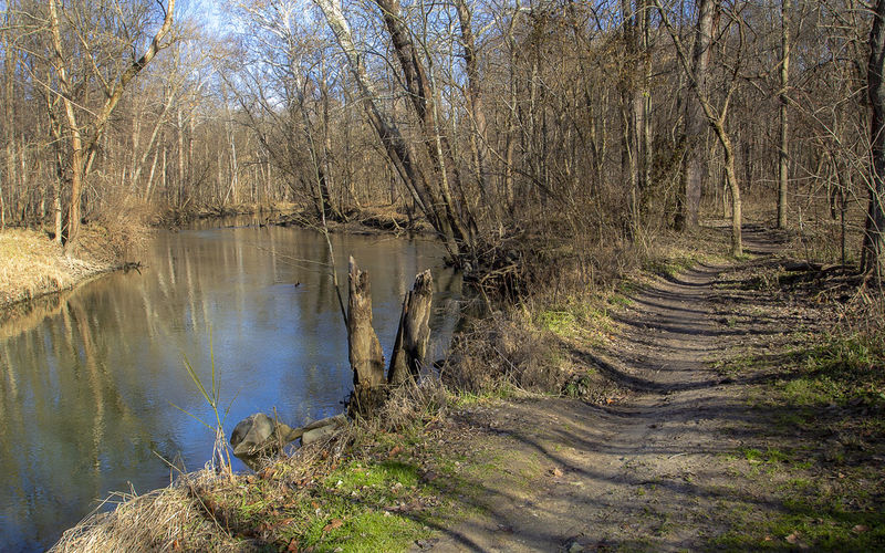A beautiful winters day offers a great opportunity for a hike. Tree Water Forest Tranquility Nature Scenics - Nature Tranquil Scene Beauty In Nature Day Non-urban Scene Reflection Growth Bare Tree Outdoors Sunlight WoodLand Idyllic Peaceful Path Trail Hiking Walking Relaxing Landscape Countryside