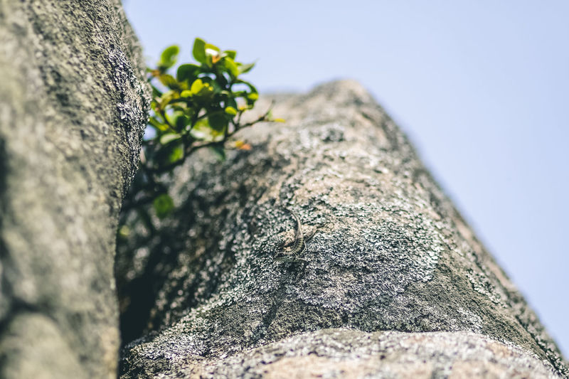 Close-up of rock on tree trunk against sky
