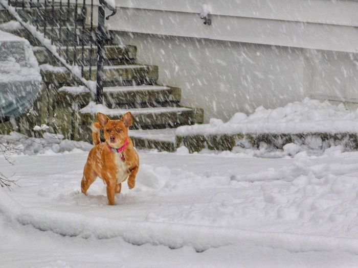 Snowing in April Snow Winter Mammal Cold Temperature Animal Themes One Animal Animal Domestic Animals Pets Domestic No People Vertebrate Day Canine Dog Nature Frozen Covering Field Snowing