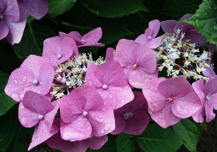 Flowers Flowerporn Flower Collection Rain Nature Hamburg