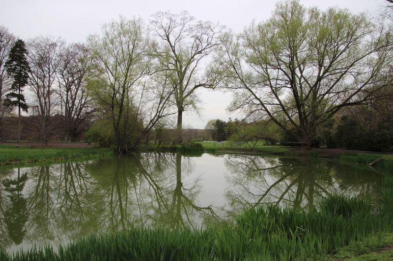 Beauty In Nature Landscape Tranquil Scene Reflection Trees Grass Water Outdoors Scenics No People