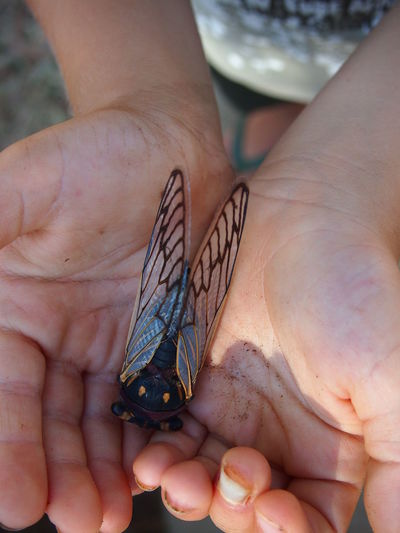 Close-up of human hands holding butterfly
