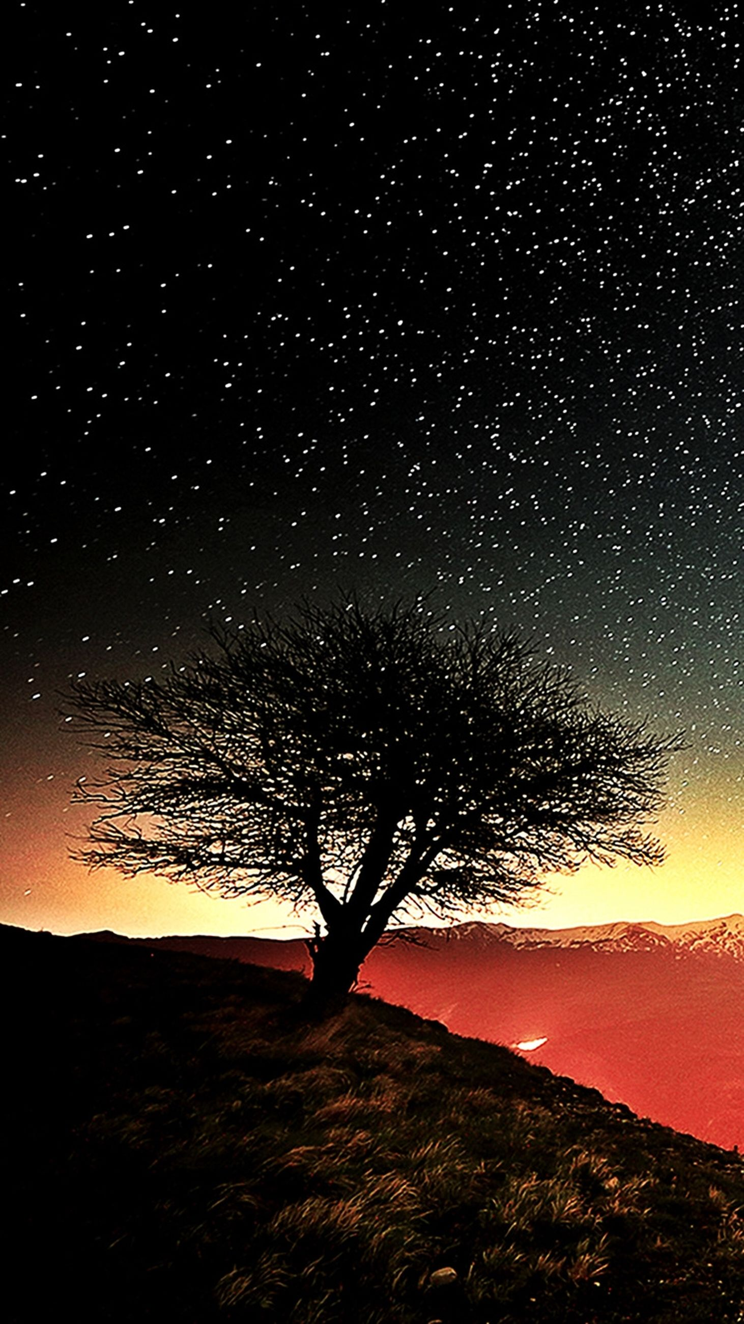 night, silhouette, tree, sky, scenics, landscape, tranquil scene, tranquility, low angle view, nature, beauty in nature, dark, star - space, field, astronomy, bare tree, idyllic, dusk, outdoors, star field