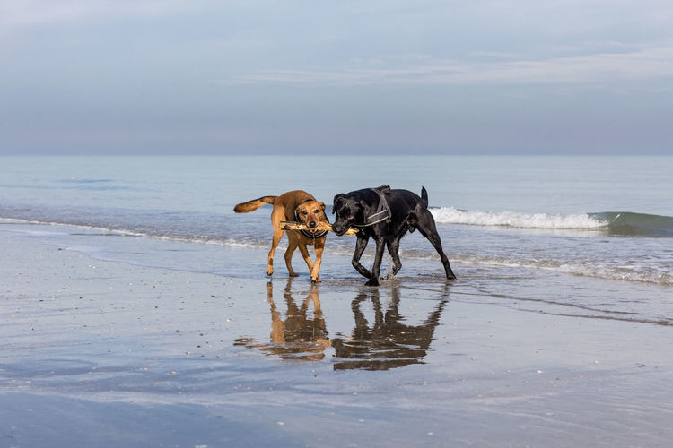 Dog standing on beach against sky