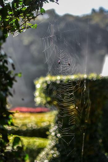 Animal Animal Themes Beauty In Nature Close-up Complexity Day Focus On Foreground Fragility Intricacy Nature No People Outdoors Plant Selective Focus Spider Spider Web Trapped Tree Vulnerability  Web