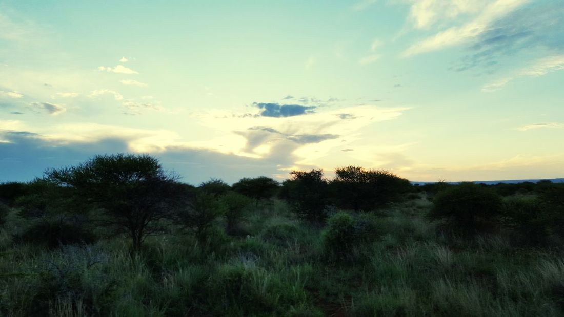 Showcase: January South Africa Outdoors Clouds Nature Photography Nature Green