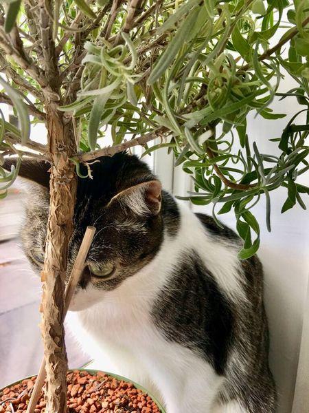 Animal Animal Themes One Animal Mammal Plant Domestic Cat Pets No People Domestic Animals Cat Day Tree Domestic