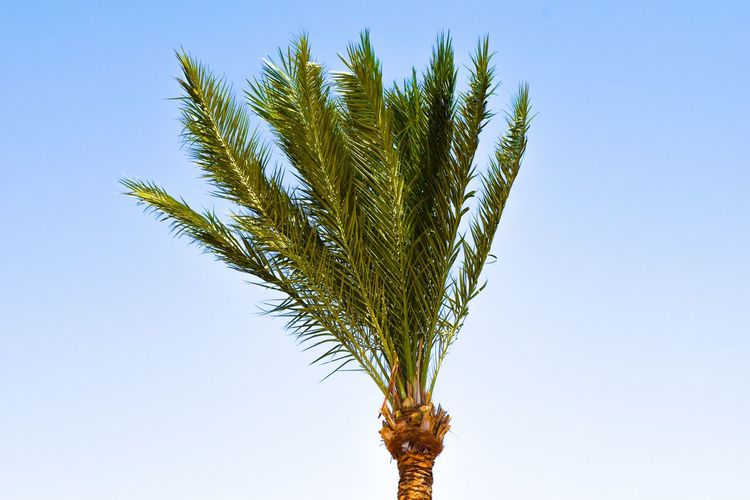 palm in front