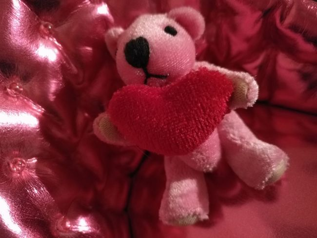 Red Teddy Bear Stuffed Toy Close-up Indoors  No People Day No Filters Or Effects I Love Pink!!!!!  I Love Pink!!!!!  Smoll Doll Hello ❤ Bear Bear Cub EyeEmNewHere Peluche , Pink! Only Pink
