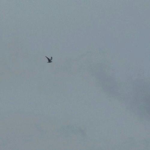 Bird Flying High Sky