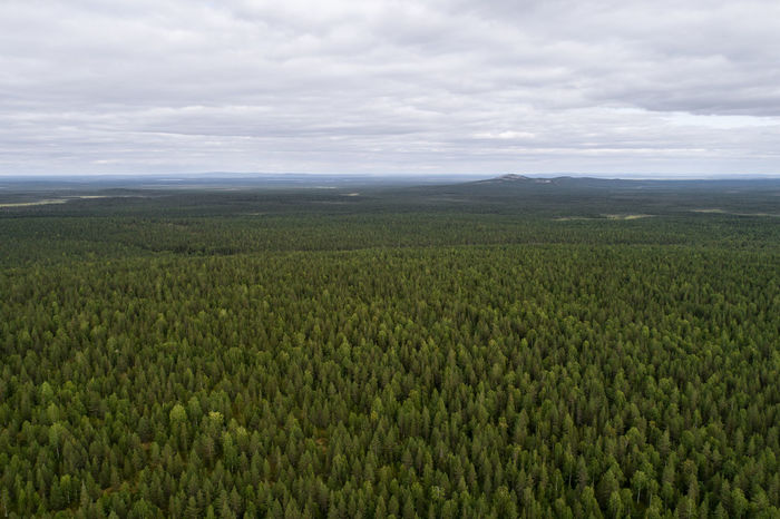 Aerial view of taiga aka boreal forest in Finland Forestry Agriculture Beauty In Nature Boreal Cloud - Sky Crop  Day Environment Farm Field Forest Green Color Growth Land Landscape Nature No People Outdoors Plant Plantation Rural Scene Scenics - Nature Sky Taiga Tranquil Scene Tranquility