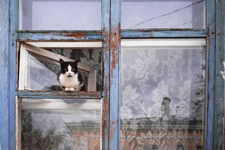 Portrait of cat seen through glass window
