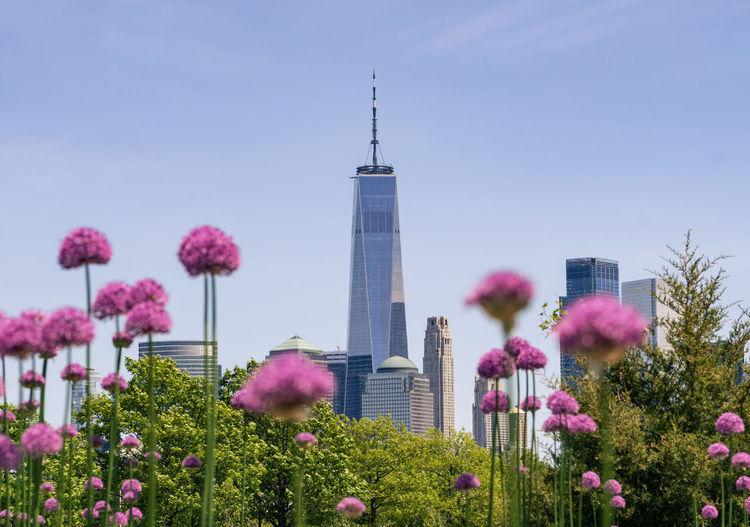 Purple flowering plants in city against sky