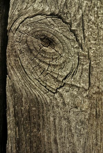 Elephant eye. Wood Nature Textures Texture Weathered Close Up Knot Detail Patterns In Nature Wood Grain Textures And Surfaces Wood Texture Weathered Wood Wood Grain Texture Showing Imperfection Wood Knot Wood Decay Patterns In Wood
