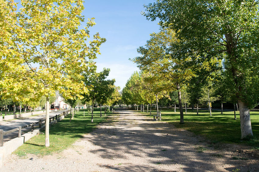 Utrillas Terual Moseo minerio y alrededores. Octubre 2018 2018 October Teruel Utrillas Beauty In Nature Day Diminishing Perspective Direction Eddl Footpath Grass Green Color Growth Nature No People Outdoors Park Park - Man Made Space Plant Shadow Sky Sunlight The Way Forward Tranquility Tree Treelined
